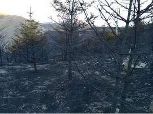 宁夏南华山大火 初步估计过火面积5000亩左右草本植物受损严重