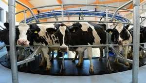 两家澳洲百年乳企在华禁售